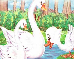 El patito feo se convierte en un bello cisne
