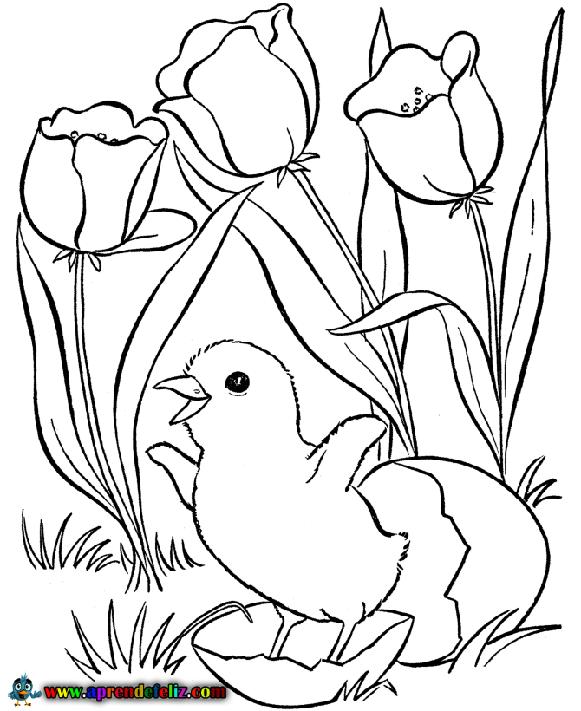 Aprende a colorear con este bonito dibujo de un pollito saliendo del cascarón rodeado de flores en primavera